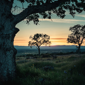 Three at Sunset by Michael Mercer - Nature Up Close Trees & Bushes
