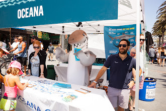 Photo: Dusky helping out at the Oceana FinFest tent. Credit: Chris Panagakis