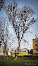 """Photo: 2016.01.16 - Parcul din Mr.1 - 'Un copac cu ciori"""""""