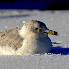 by Roseann Jech - Animals Birds