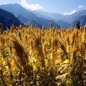 darma valley by Kaushik Dolui - Landscapes Prairies, Meadows & Fields ( kaushik -darma )