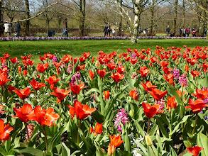 Photo: Staggered planting ensures optimum blooming