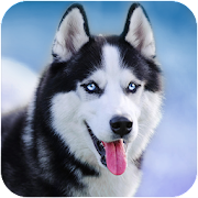 App Talking Husky APK for Windows Phone