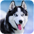 Talking Husky file APK for Gaming PC/PS3/PS4 Smart TV
