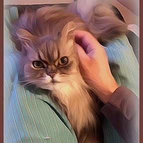 Simba by Pam Blackstone - Digital Art Animals ( cat, lap cat, pants, fur, legs, lap,  )