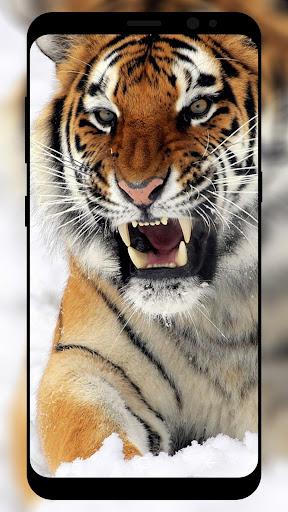 Tiger Wallpaper HD  screenshots 1