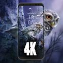 Wallpaper Owl live HD 4K icon
