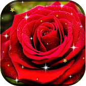Rose Flower Live Wallpaper HD