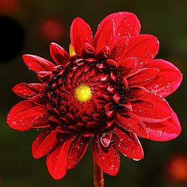 Position ventilateur by Gérard CHATENET - Flowers Single Flower (  )