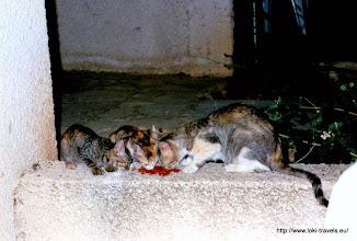 Photo: En kort daarna haar kinderen! | And shortly after her kittens!