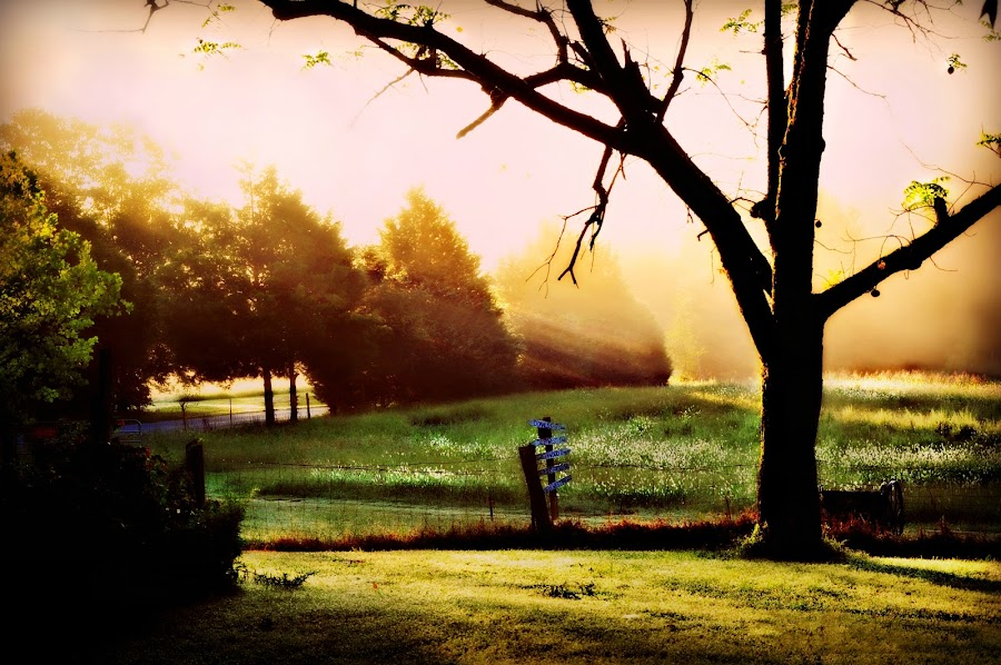 Sept. Morn by Mary Bray - Landscapes Weather ( farm, fog, morning, sun rays )