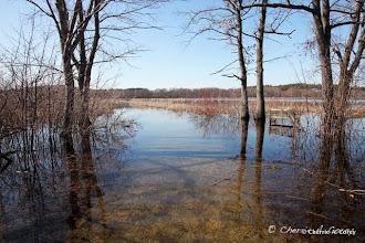 Photo: High water, 3.17.11