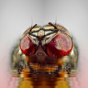 sneaky by Joseph Balson - Animals Insects & Spiders (  )