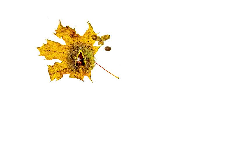 Pillole d'autunno di Sara Jazbar