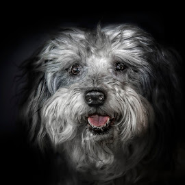 Pocco Locco by Heather Allen - Animals - Dogs Portraits