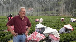 Taiwan -- The Culture of Tea thumbnail