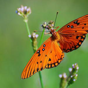 Orange Beauty.jpg