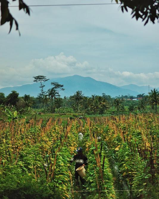 Pemandangan menuju Kampung Naga