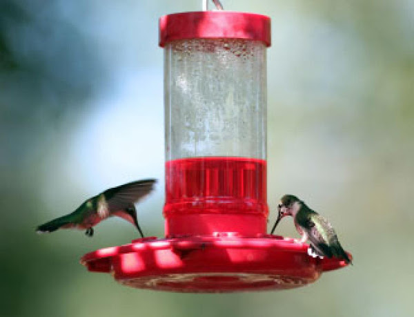 Diy Humming Bird Food Recipe