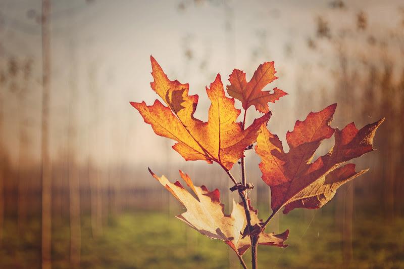 Leaves di Erato