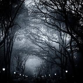 Central Park Lights by Gina Gomez - City,  Street & Park  City Parks ( black and white, trees, new york, central park, city park, people, city )