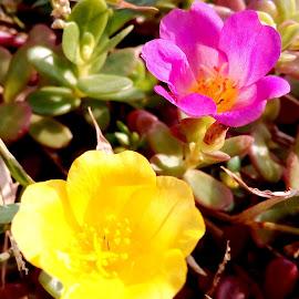 Two flower by Vpsamy Vpsamy - Flowers Flower Buds