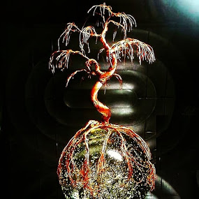stranded by Brian Boyer - Artistic Objects Other Objects ( wire, copper wire tree, tree, recycle, copper wire, wiretree )