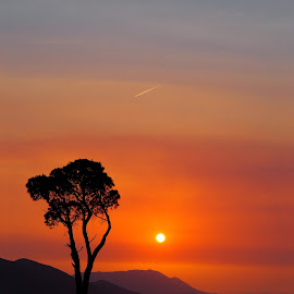 Lonely tree by Michal Fokt - Landscapes Sunsets & Sunrises ( tree, silhouette, sunset,  )