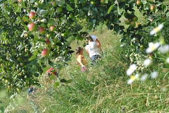 Photo: nel prato sotto al melo