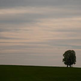 by Dušan Gajšek - Landscapes Prairies, Meadows & Fields