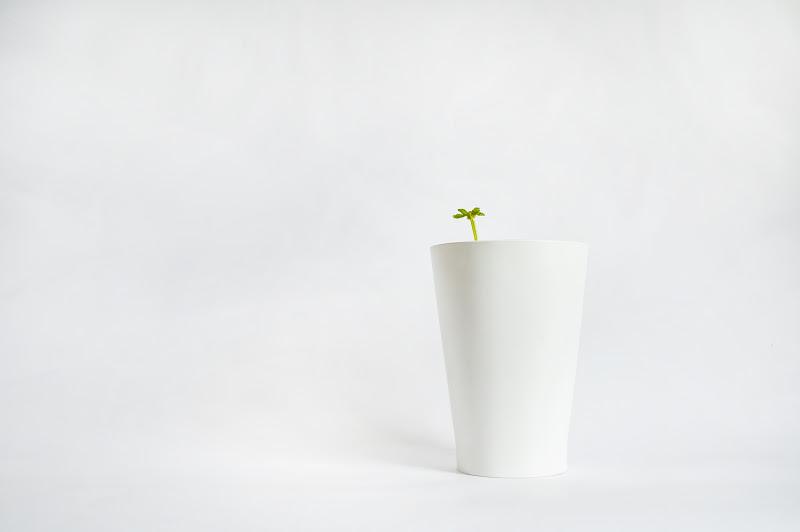 botanika di bi