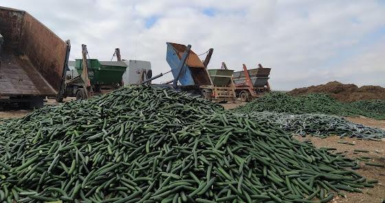 La crisis de precios de las hortalizas une a todo el campo almeriense