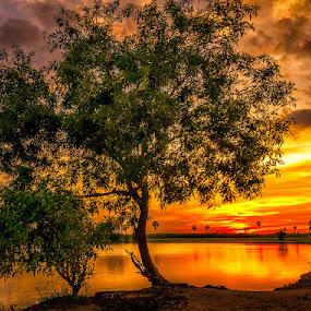 Lonely  by Liquid Lens - Landscapes Sunsets & Sunrises (  )