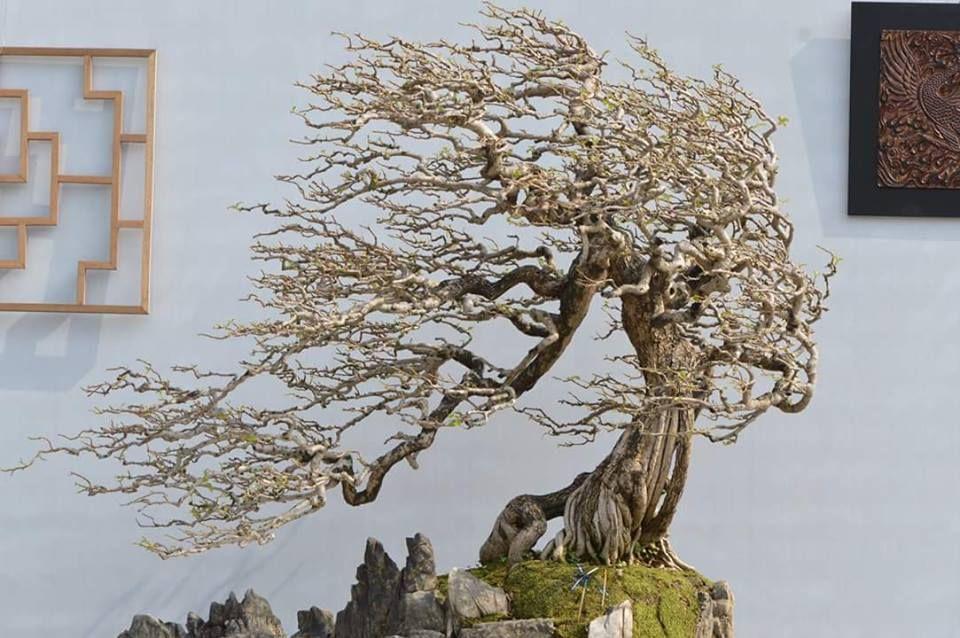 bonsai modelo fukinagashi