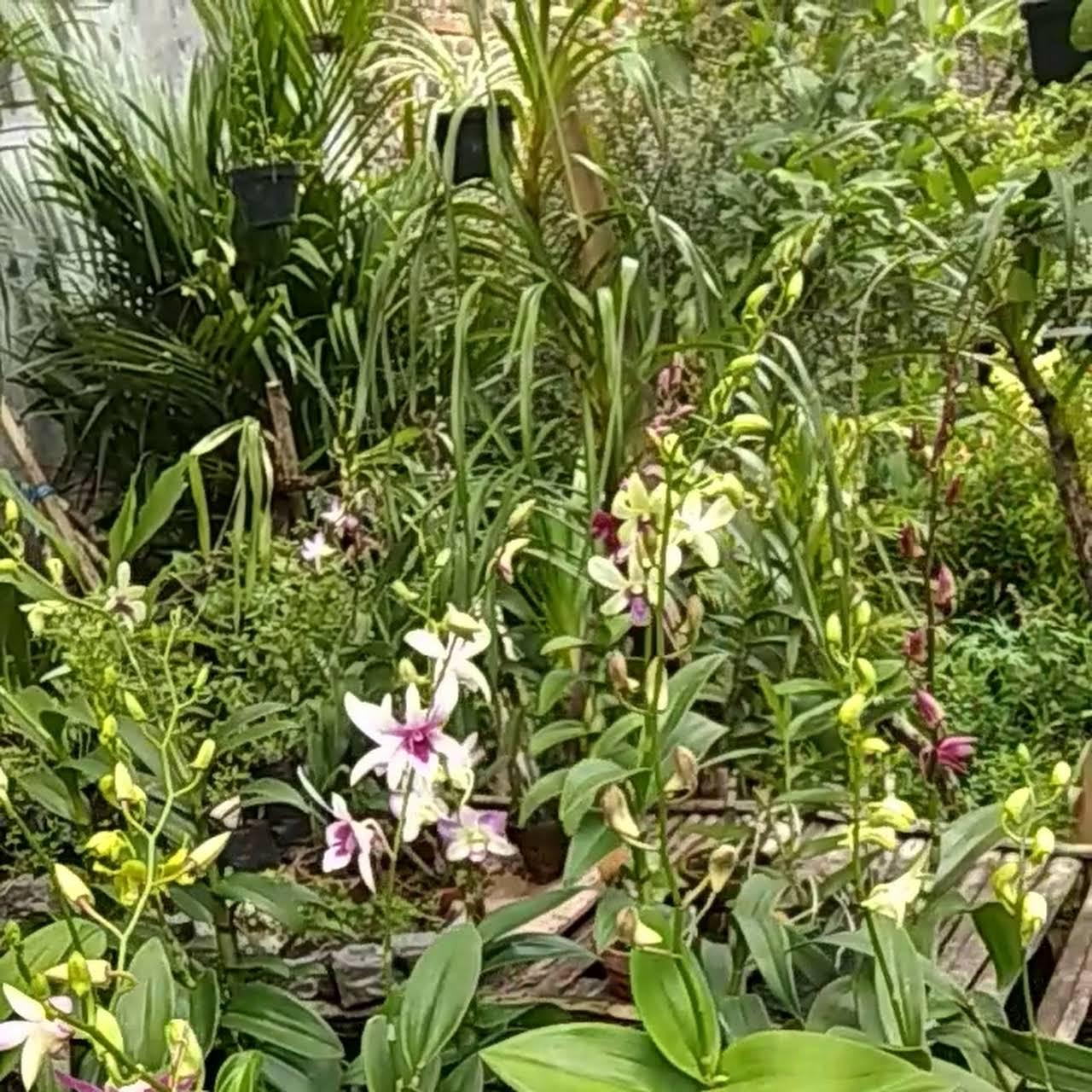 Son Garden Toko