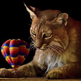 Curiosity by Shawn Thomas - Digital Art Animals (  )