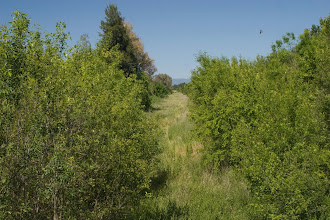 Photo: North Davis (Covell) canal - F Street acess area -  view to west