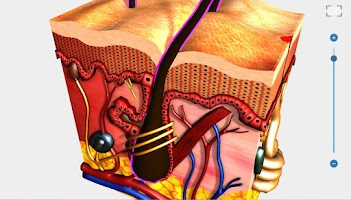Screenshot of anatomia humana 3D