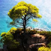 Tree In Water Live Wallpaper