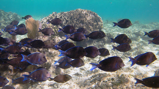 Snorkeling at Infinity Bay Resort in Roatan, Honduras.