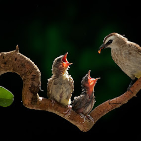 Feeding Time by CK NG - Animals Birds ( love, bird, feeding )