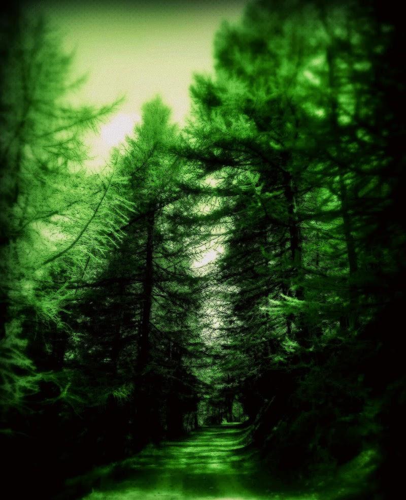Il bosco dei sogni... di loveombra