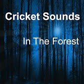Cricket Sounds In The Forest