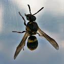 Resin Mason Wasp