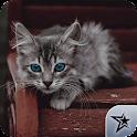 Imagenes de gatos! icon