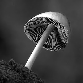 Mushroom  by Asif Bora - Black & White Macro