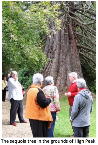 The sequoia tree in the grounds of High Peak