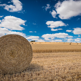 by Mark Anolak - Landscapes Prairies, Meadows & Fields ( landscape,  )