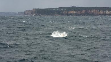 Photo: Humpback and North Head