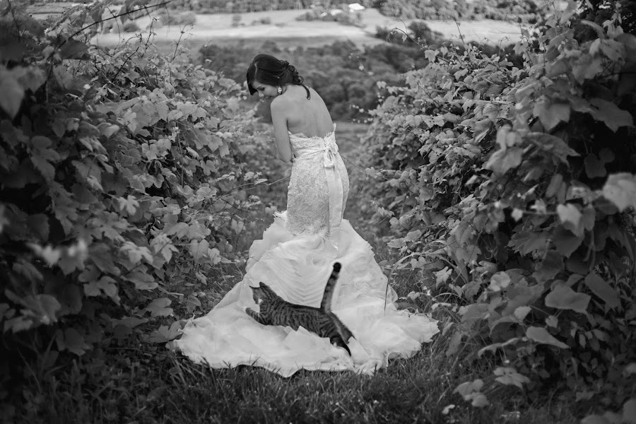 Wedding photographer Ken Pak (kenpak). Photo of 24.02.2016